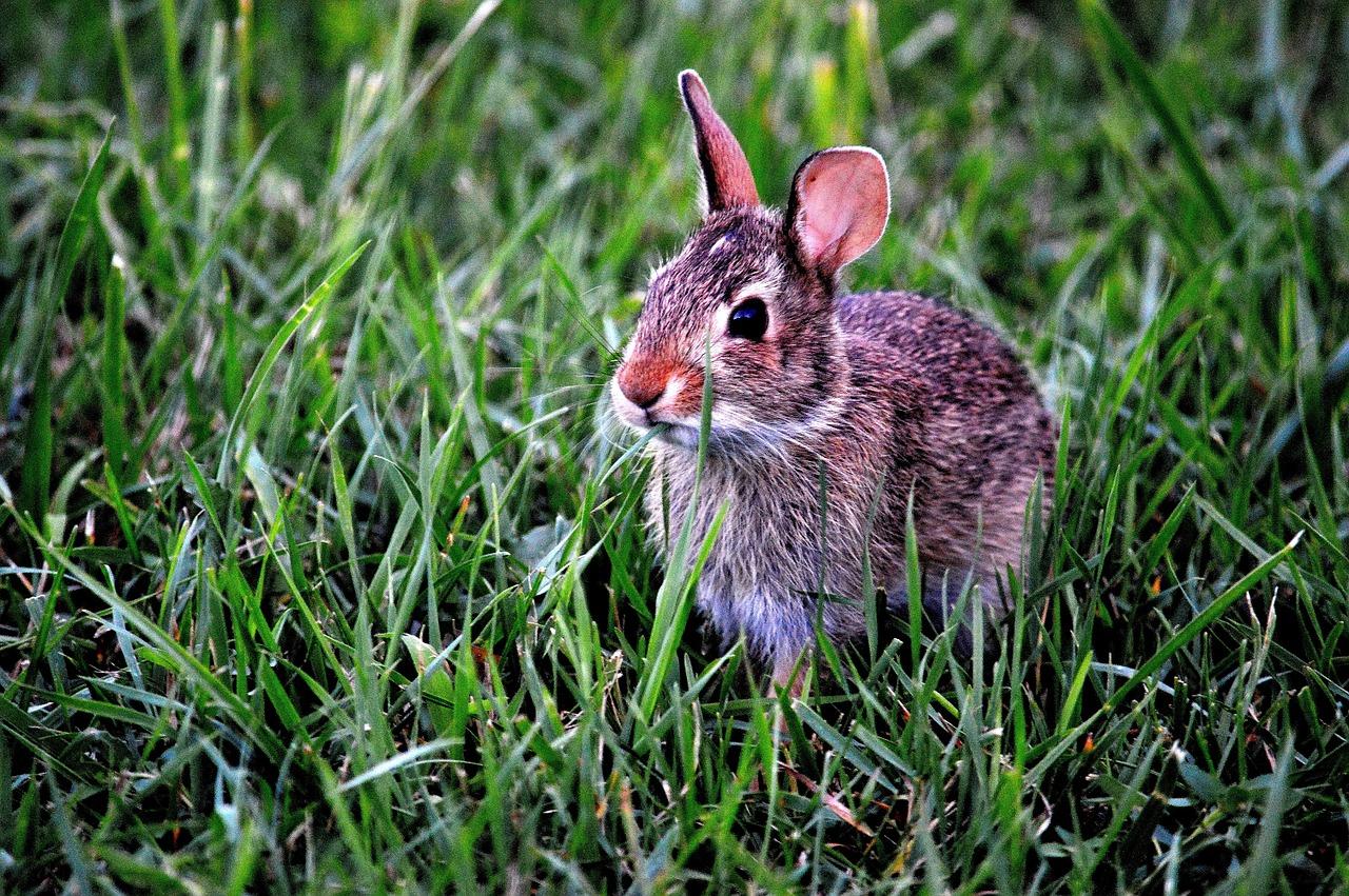 bunny-183301_1280
