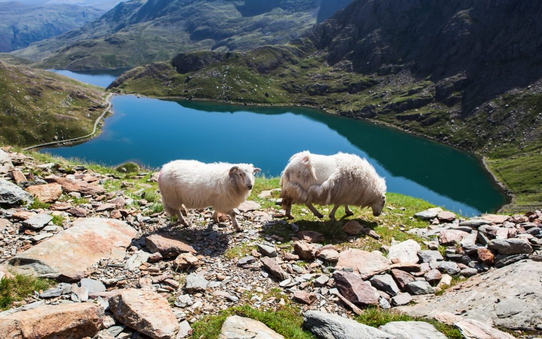The Most Scenic Spots in Snowdonia