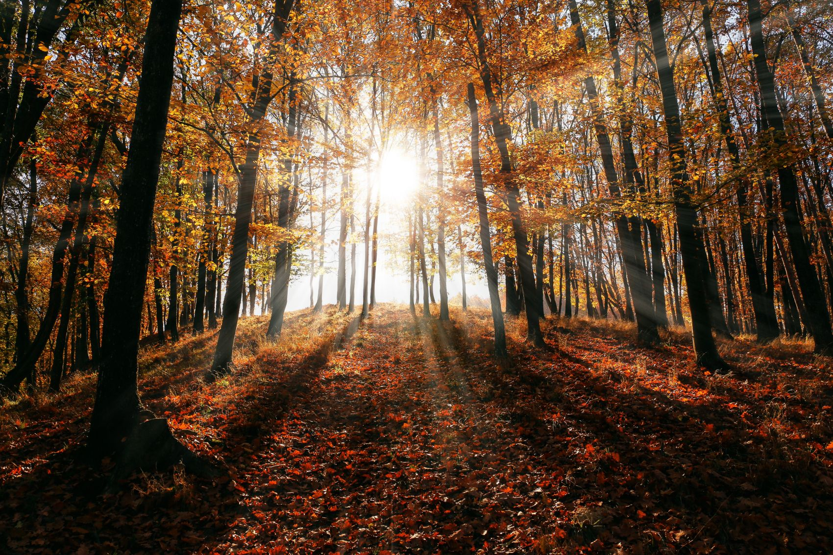 Great reasons to use your holiday home this autumn